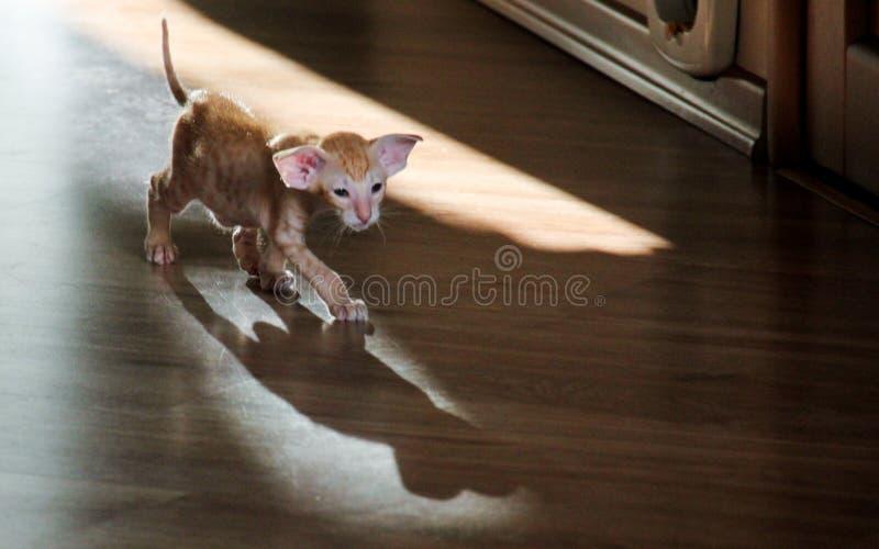 O predador saiu na primeira caça na vida imagem de stock royalty free