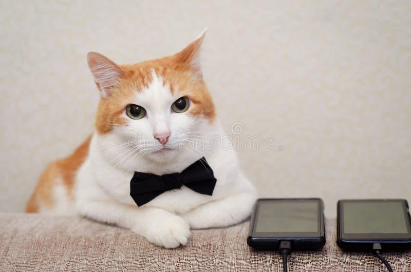 O preto vestindo do gato prepara o laço no casamento imagem de stock royalty free