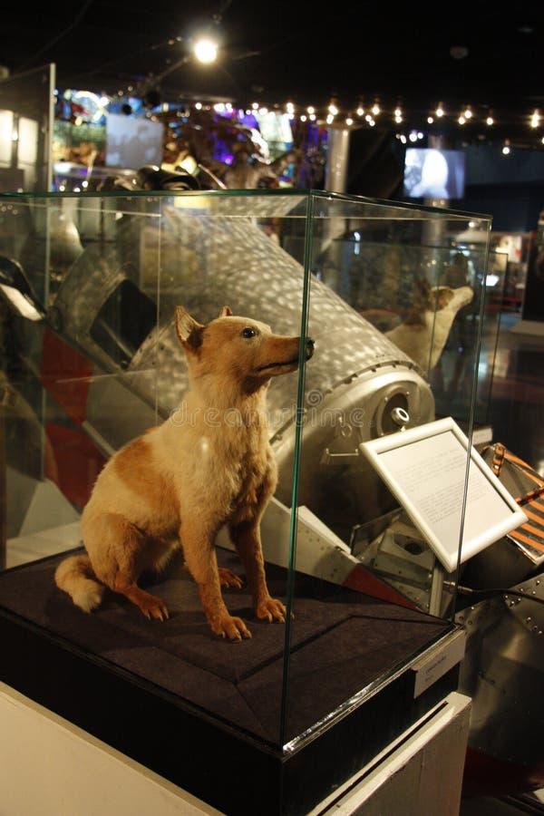 O primeiro cão do espaço foto de stock royalty free