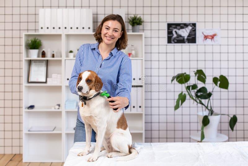 O procedimento de preparar cães em uma clínica veterinária fotos de stock royalty free
