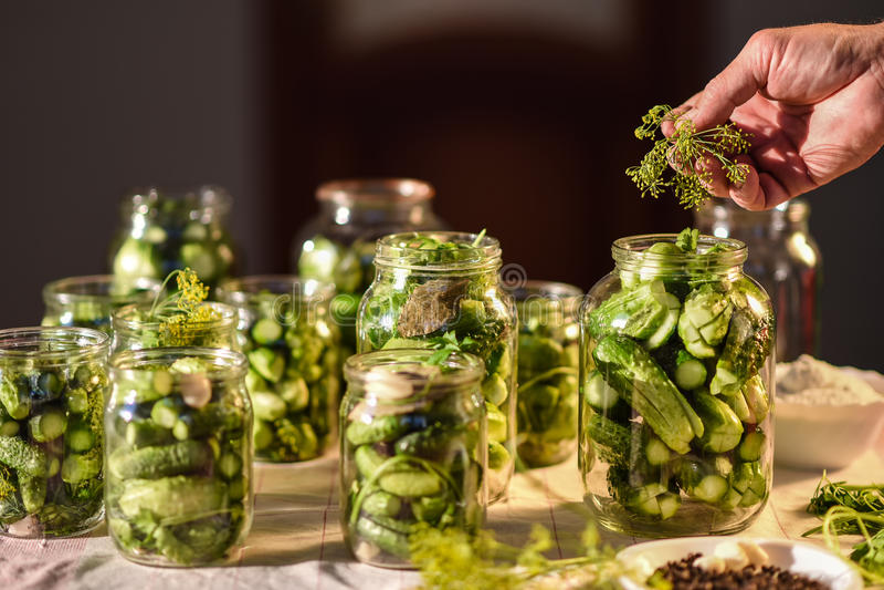 O processo de preparação de pepinos salgados para enlatar, Ucrânia fotografia de stock royalty free