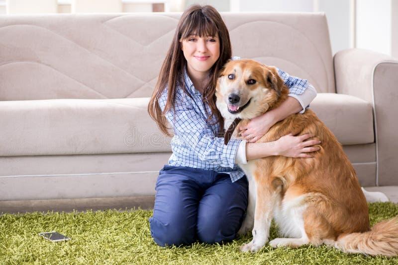 O proprietário feliz do cão da mulher em casa com golden retriever imagem de stock