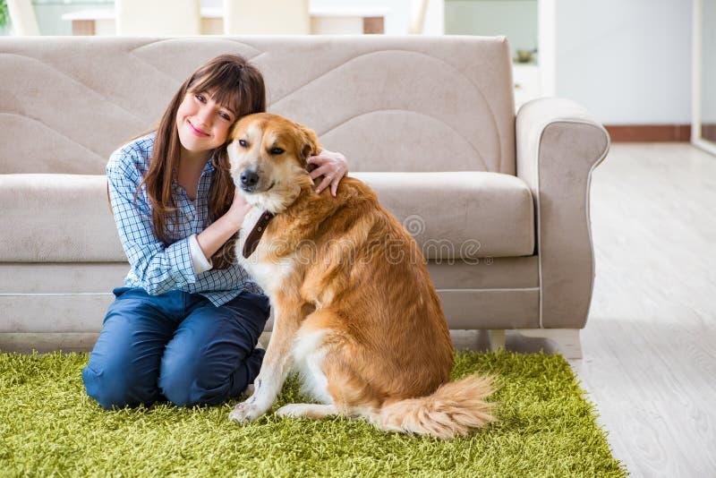 O proprietário feliz do cão da mulher em casa com golden retriever fotografia de stock royalty free