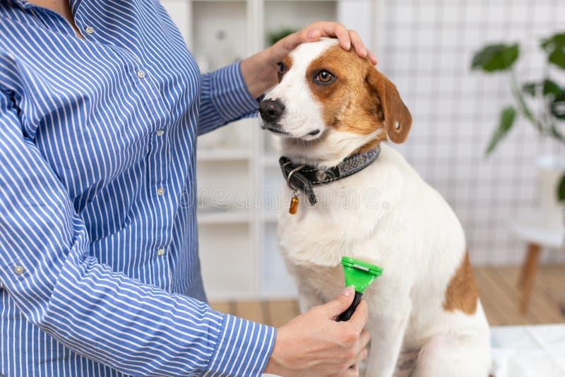 O proprietário penteia o cabelo de cão com um pente Fim acima Fundo borrado fotos de stock royalty free