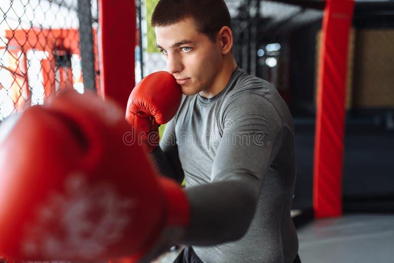 O pugilista masculino contratou no treinamento no gym, em uma gaiola para uma luta fotografia de stock
