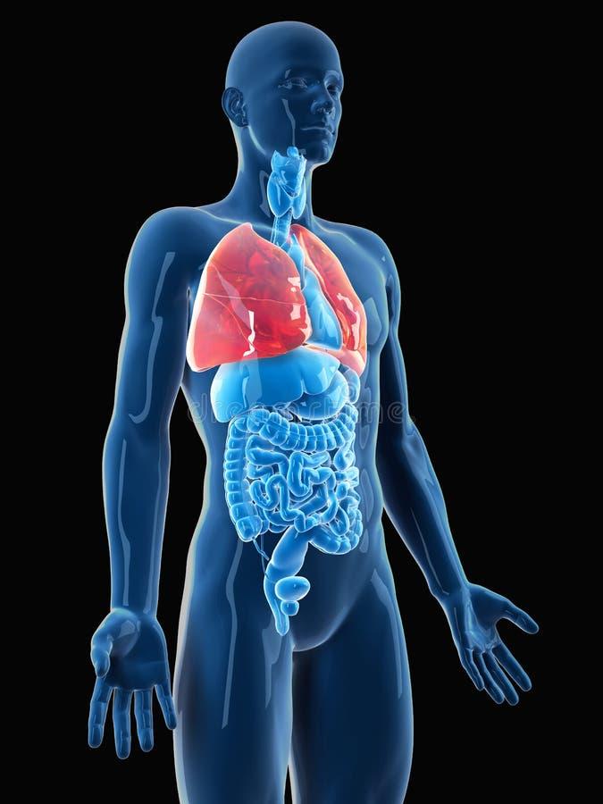 O pulmão ilustração royalty free