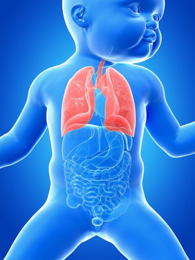 O pulmão de um bebê ilustração do vetor