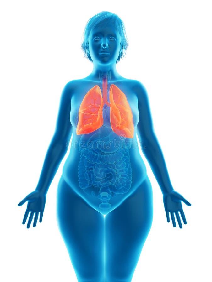 o pulmão obeso de uma mulher ilustração stock