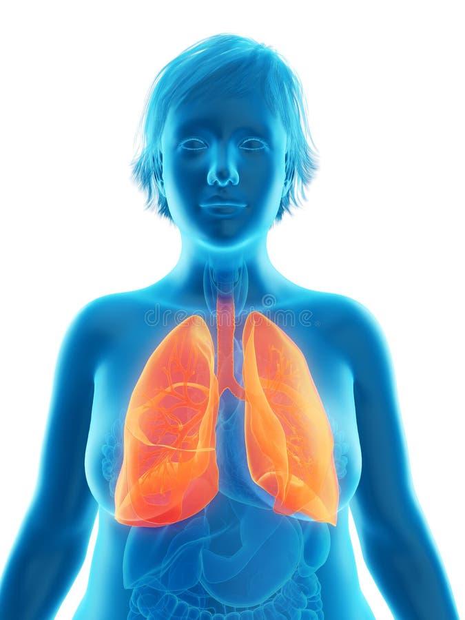 o pulmão obeso de uma mulher ilustração royalty free