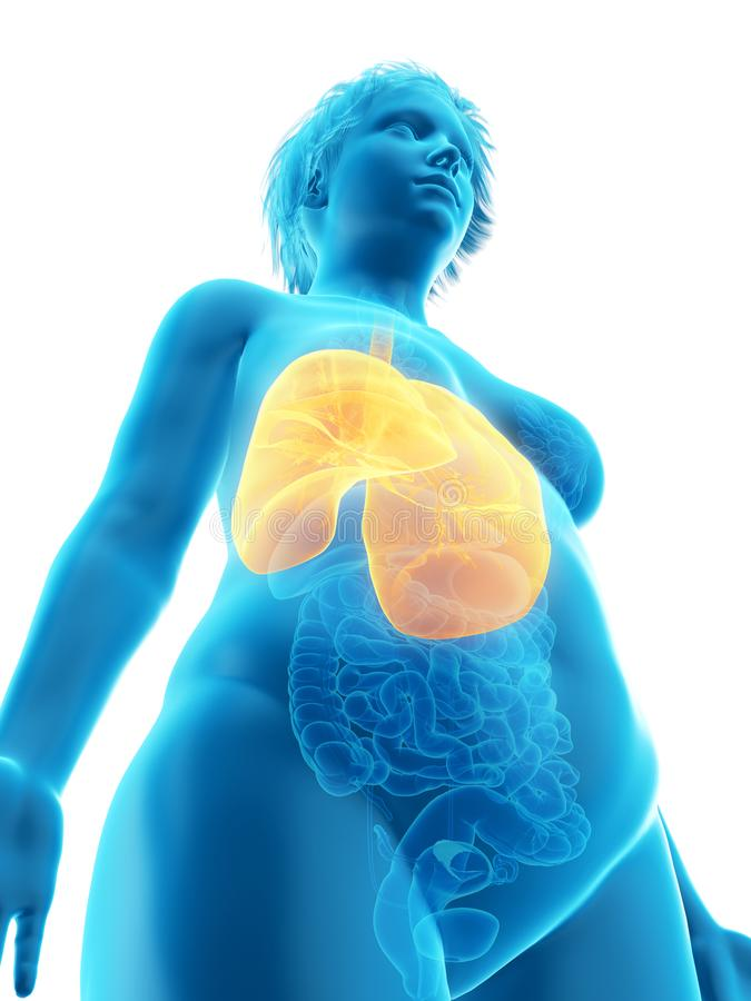 o pulmão obeso de uma mulher ilustração do vetor