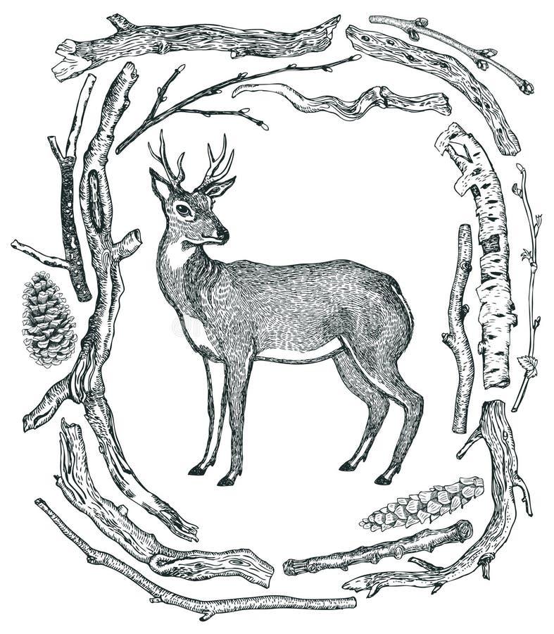 O quadro bonito dos cervos de madeiras selvagens selvagens da madeira lançada à costa esboça o estilo H ilustração royalty free