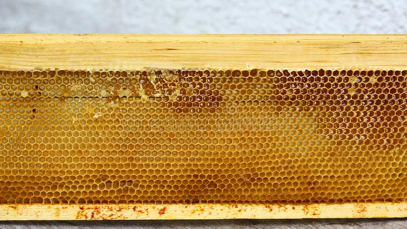 O quadro da colmeia do apiário com abelhas encera a estrutura completamente do mel fresco da abelha nos favos de mel fotos de stock royalty free