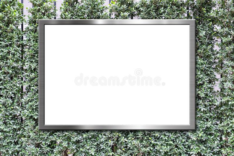 O quadro de avisos vazio no verde sae do fundo da textura da parede imagem de stock royalty free