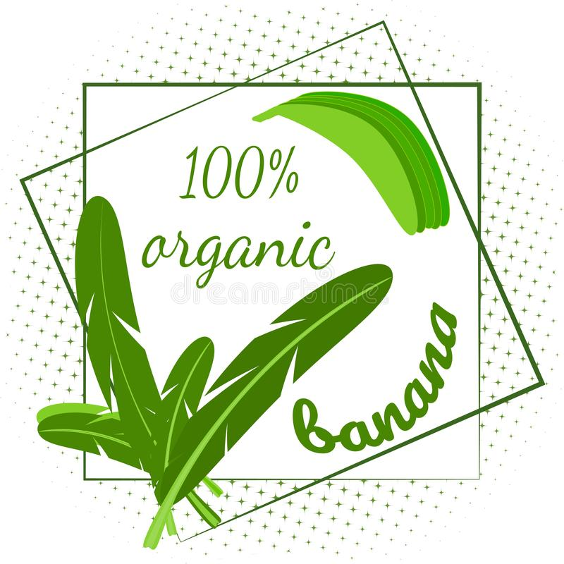 O quadro decorativo das folhas da palmeira e das bananas, o texto é uma banana orgânica ilustração stock