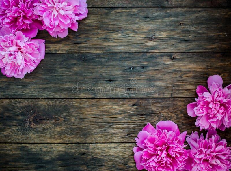 O quadro floral com peônias cor-de-rosa floresce no fundo de madeira Foco seletivo, lugar para o texto, vista superior foto de stock royalty free
