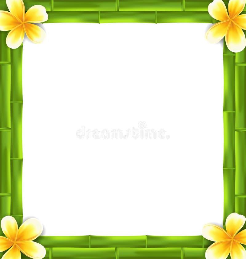 O quadro natural fez as flores do bambu e do Frangipani, espaço da cópia para seu texto ilustração royalty free