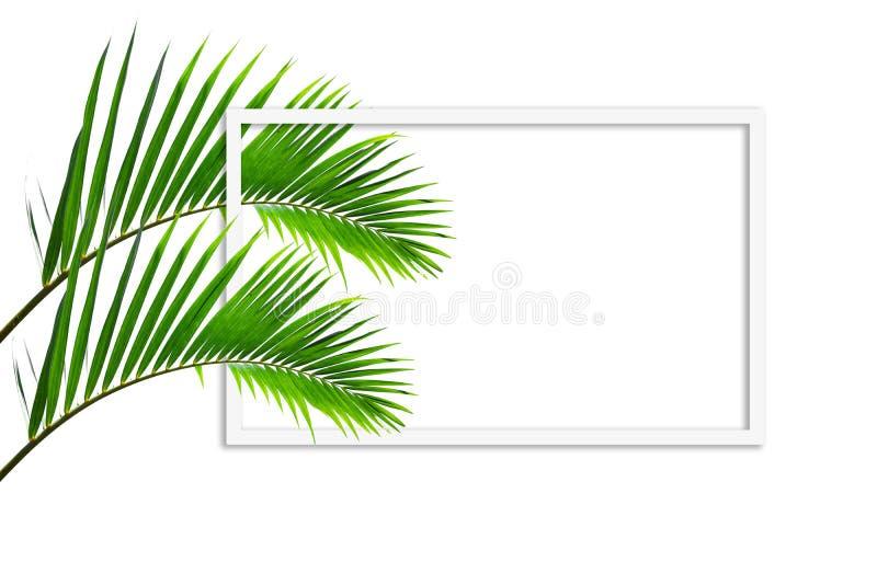 O quadro quadrado, disposição criativa fez a folha verde da palmeira do coco isolada no fundo branco com nota do cart?o de papel ilustração royalty free