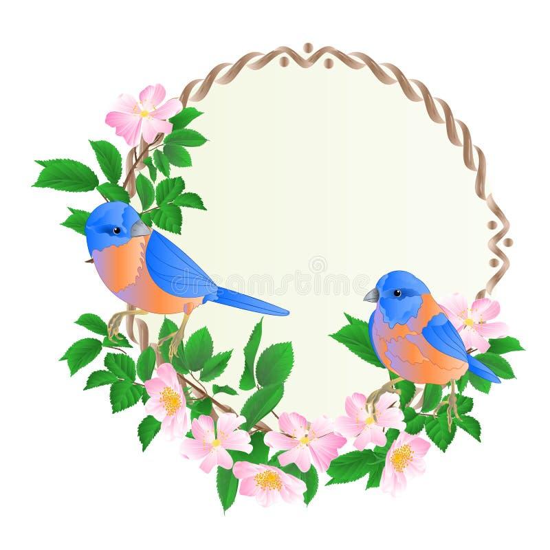 O quadro redondo floral com rosas selvagens e a ilustração festiva do vetor do fundo do vintage pequeno bonito dos azulão-america ilustração royalty free