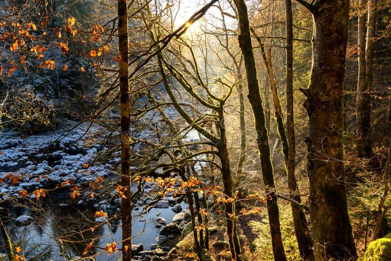O raio de sol pensou a floresta no inverno perto de Saut du doubs, Franchecomté fotos de stock royalty free