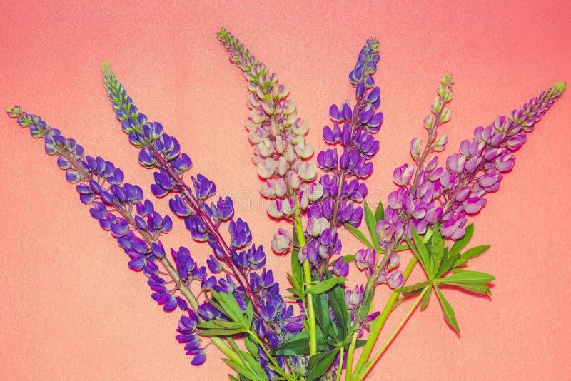 O ramalhete bonito de flores brilhantes chamou tremoceiros foto de stock royalty free