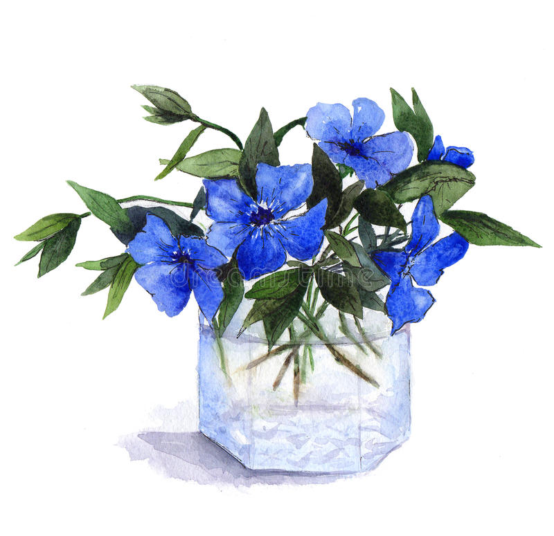 O ramalhete da pervinca azul floresce no vaso de vidro Ilustração da aguarela foto de stock