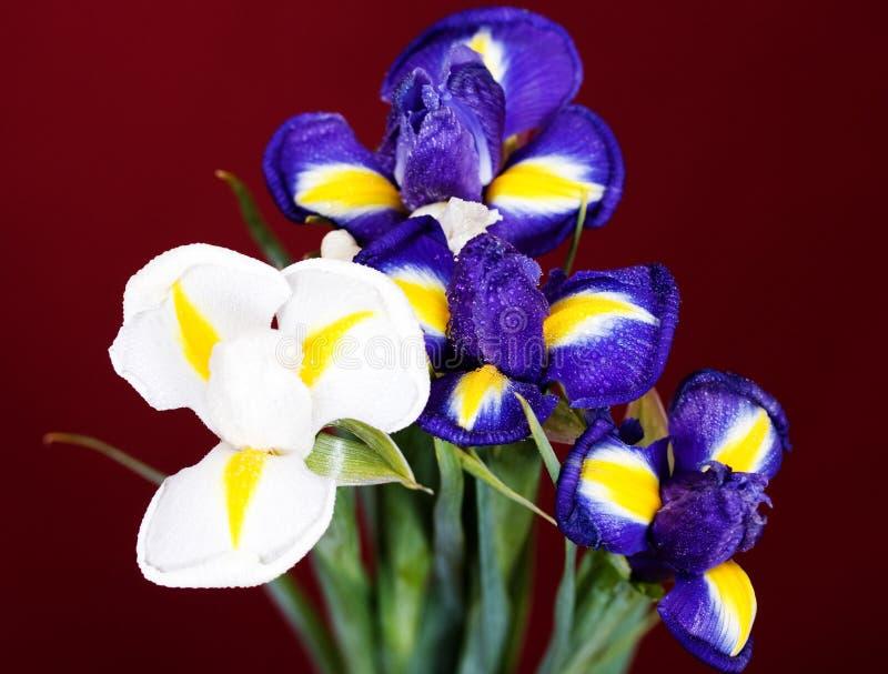 Download Íris imagem de stock. Imagem de flor, jardim, pétala - 29844751