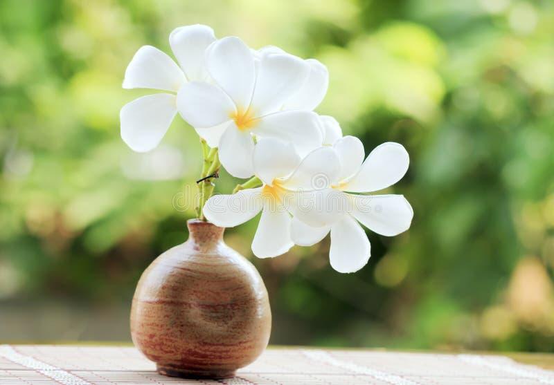 O ramalhete do Frangipani, Plumeria em uns frascos da argila com borrou a fotografia de stock royalty free
