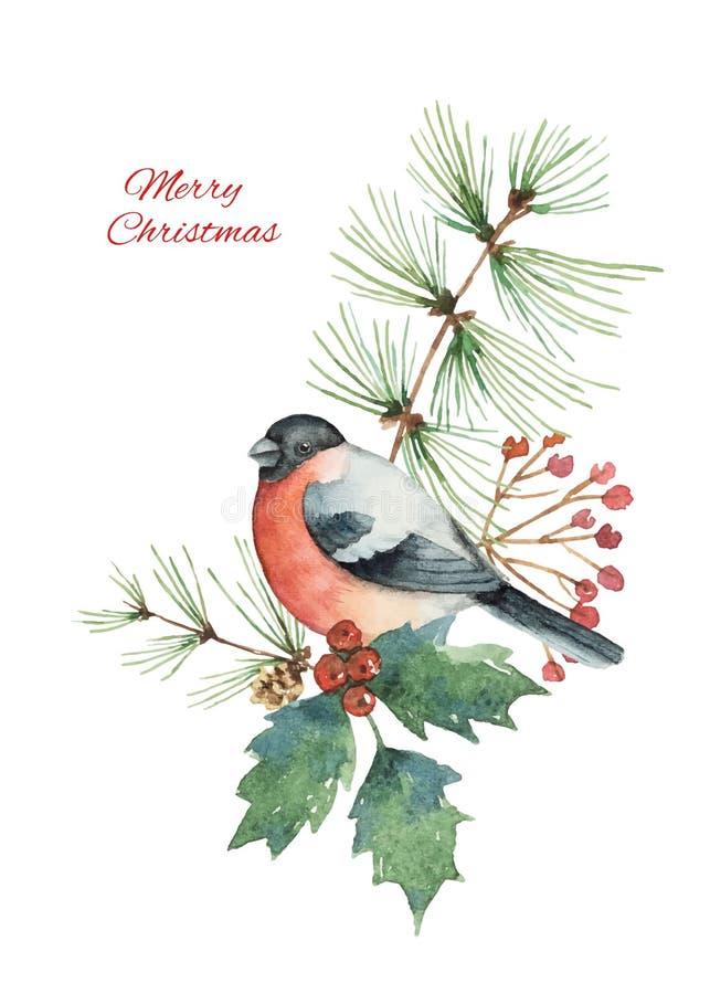 O ramalhete do Natal do vetor da aquarela com dom-fafe e abeto ramifica ilustração do vetor