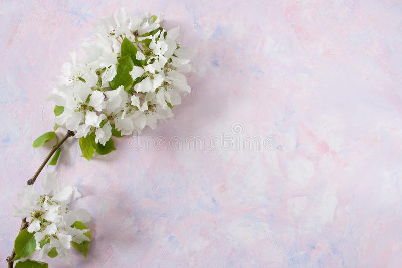 O ramo da mola da árvore de Apple está encontrando-se na esquerda no fundo textured na moda do branco-cor-de-rosa-lilás imagem de stock royalty free