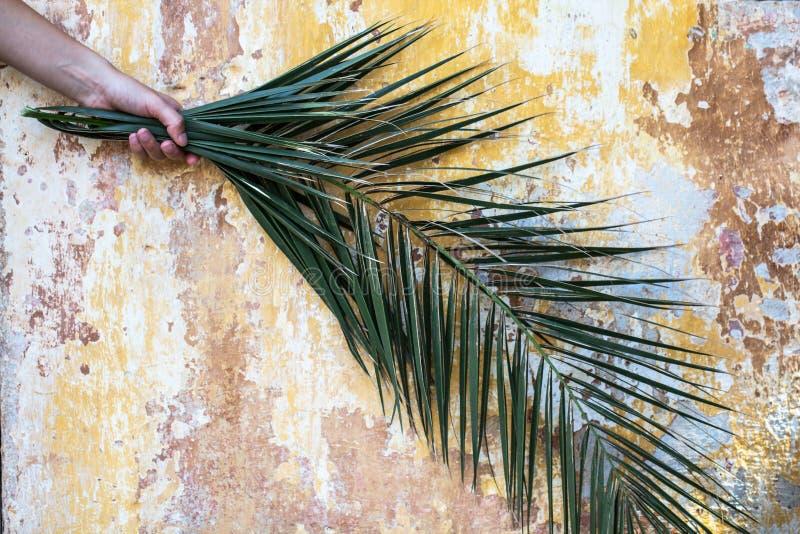 O ramo da palma na mão da mulher e no vintage velho bonito rachou a dor imagens de stock