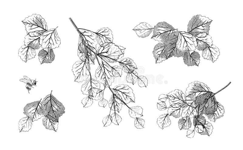 O ramo de árvore sae do grupo do vetor ilustração stock