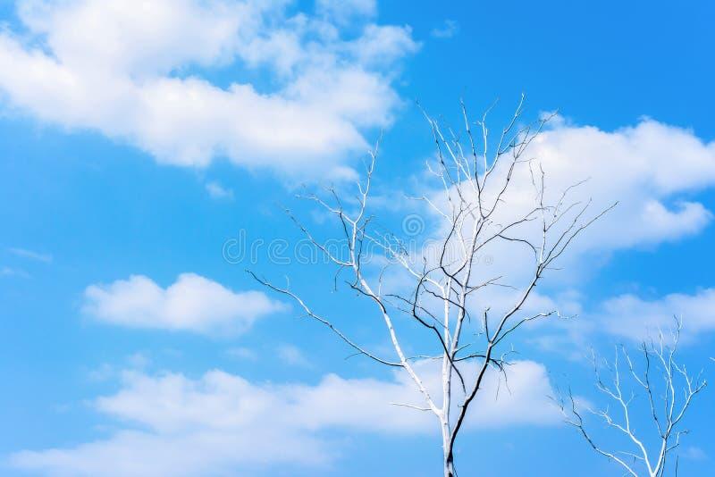O ramo de árvores inoperantes no céu azul e no branco nubla-se o fundo imagem de stock