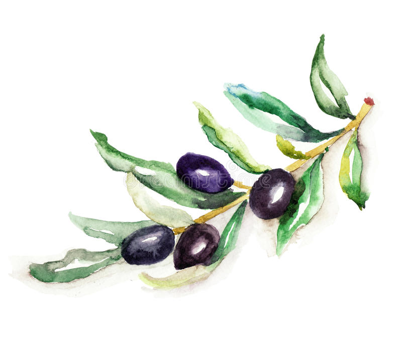 O ramo de azeitona ilustração royalty free