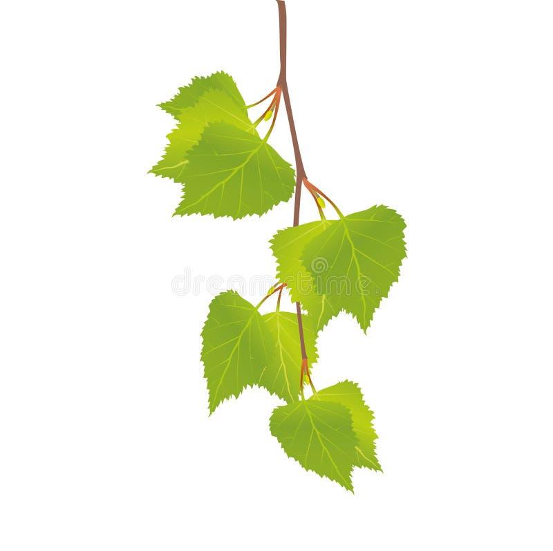 O ramo de um vidoeiro com folhas ilustração royalty free