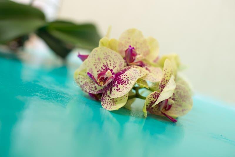 O ramo de uma orquídea amarela imagens de stock royalty free