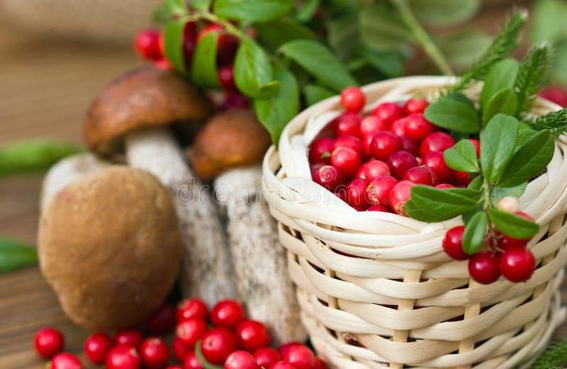 O ramo dos arandos que encontram-se em uma cesta encheu-se com as bagas vermelhas, em um fundo dos cogumelos fotografia de stock royalty free