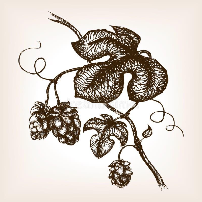 O ramo dos lúpulos entrega o vetor tirado do estilo do esboço ilustração royalty free
