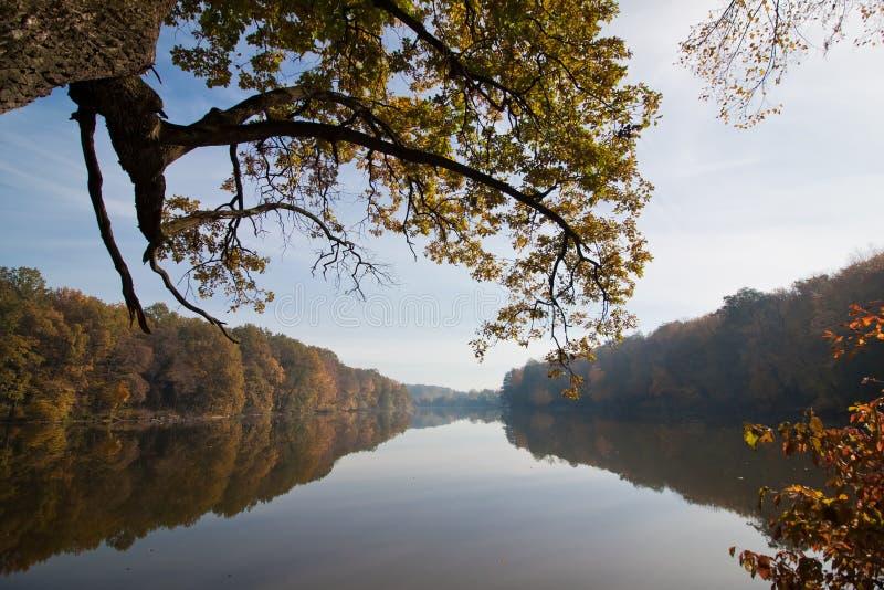 O ramo grande e poderoso do carvalho com folhas verdes pendura sobre o lago da floresta, reflexões das árvores na superfície imóv imagens de stock