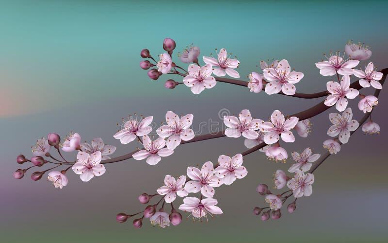 O ramo realístico da cereja de sakura japão com florescência floresce O fundo da natureza com ramo da flor de sakura cor-de-rosa  ilustração do vetor