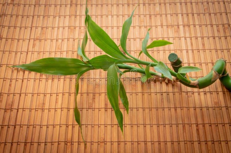 O ramo verde das mentiras de bambu da haste e da folha em um guardanapo de bambu imagens de stock