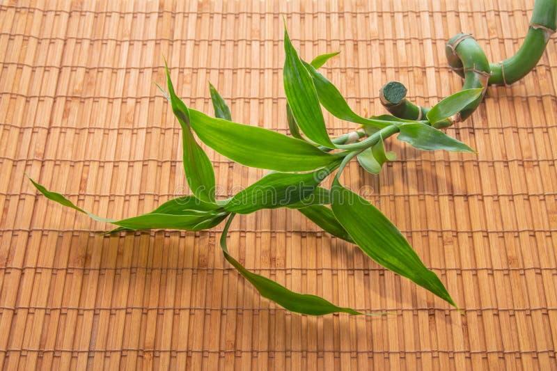 O ramo verde das mentiras de bambu da haste e da folha em um guardanapo de bambu fotos de stock