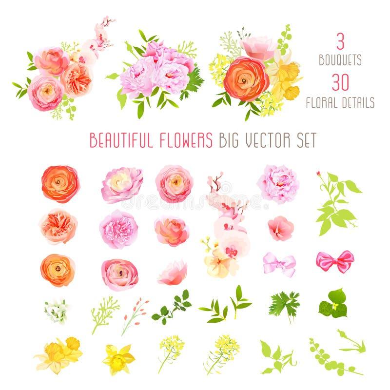 O ranúnculo, aumentou, peônia, narciso, flores da orquídea e coleção grande do vetor das plantas decorativas ilustração royalty free