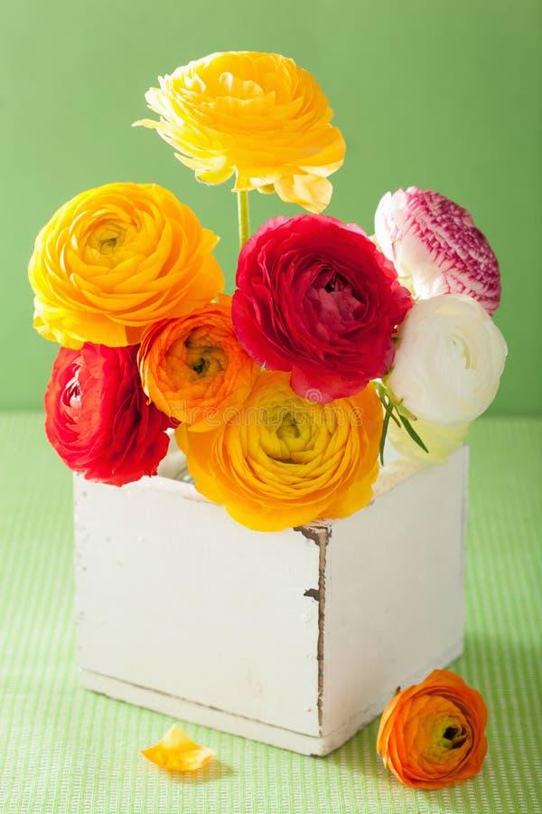 O ranúnculo colorido floresce no vaso sobre o fundo verde fotografia de stock