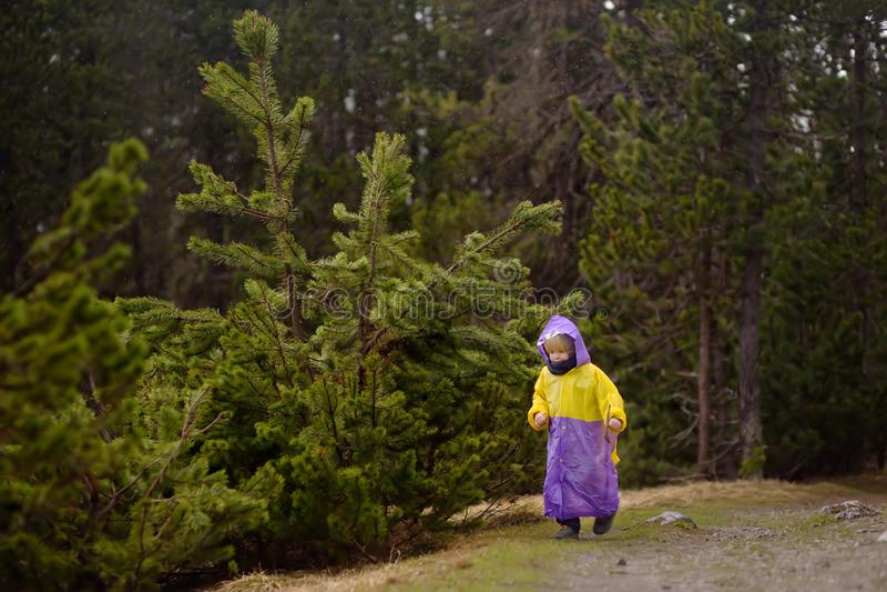 O rapaz pequeno bonito anda no parque nacional suíço no dia chuvoso Caminhada com crianças fotos de stock