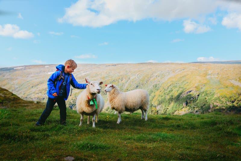 O rapaz pequeno e os carneiros nas montanhas, crianças viajam para aprender animais imagens de stock royalty free