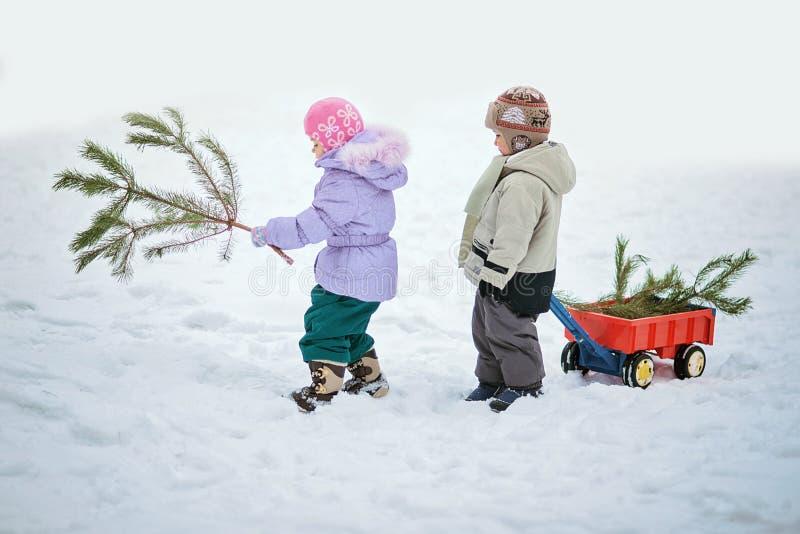 O rapaz pequeno leva uma árvore de Natal com vagão vermelho A criança escolhe uma árvore de Natal imagens de stock