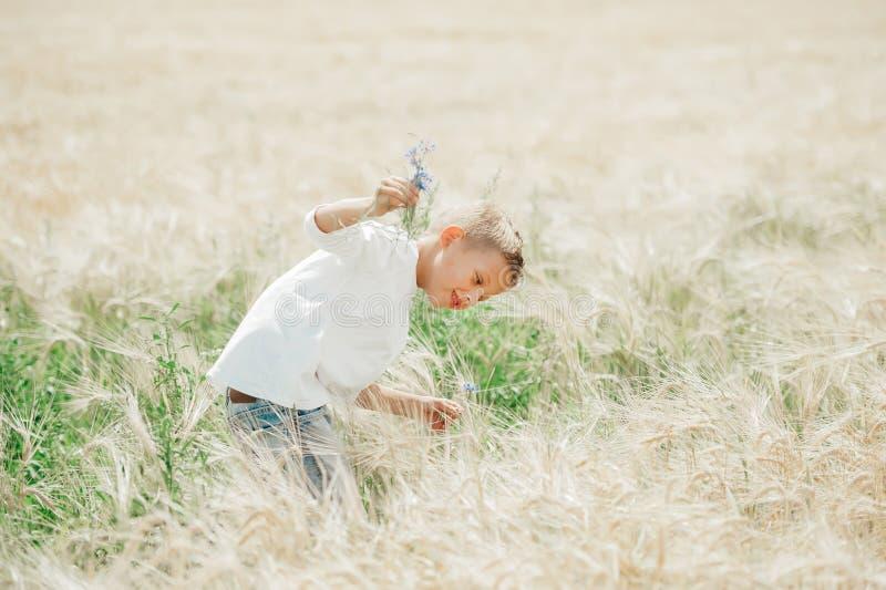 O rapaz pequeno recolhe um ramalhete das flores para a mãe no campo do verão fotos de stock royalty free