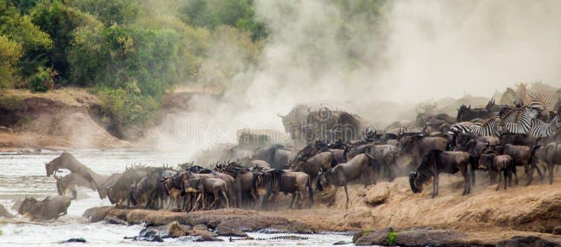 O rebanho grande do gnu é sobre Mara River Grande migração kenya tanzânia Masai Mara National Park ilustração stock