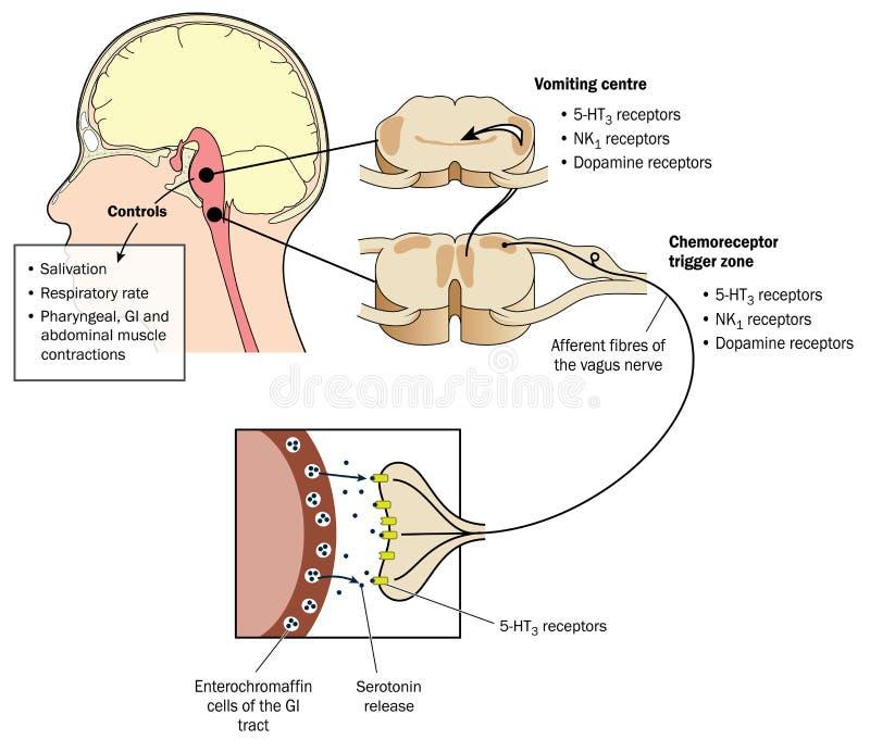 prostata infiammata e fertility centers