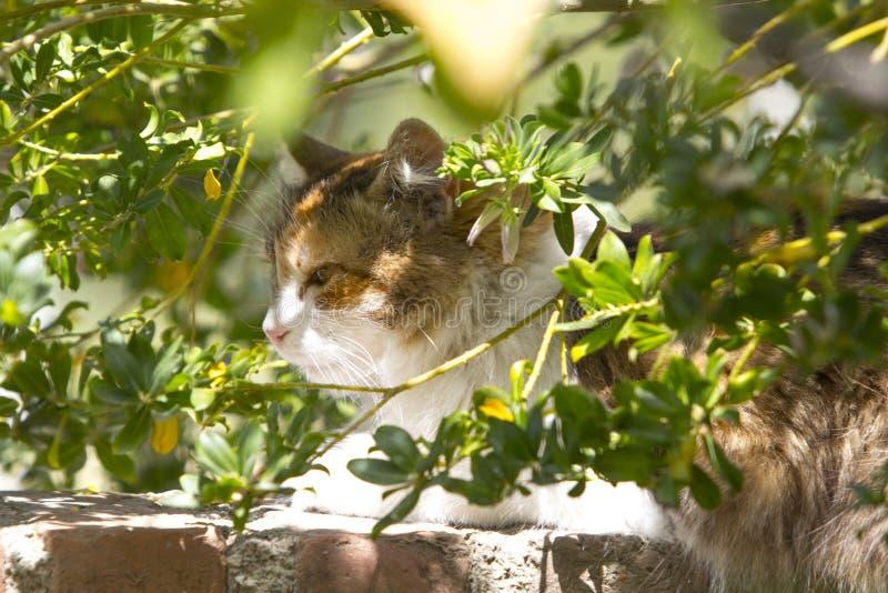 O retrato bonito de gato de chita na folha foto de stock